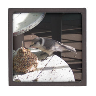 Gray Jay and Bell Jewelry Box