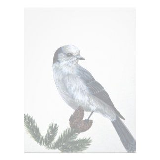 Gray jay letterhead