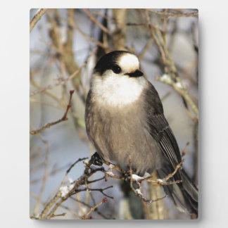 Gray Jay Photo Plaques