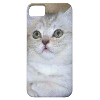 Gray kitten iPhone 5 Case Barely There
