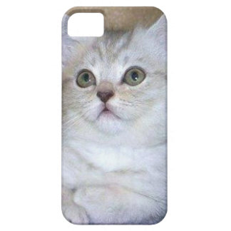 Gray kitten iPhone 5 Case-Mate phone case