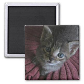 Gray Kitten Refrigerator Magnet