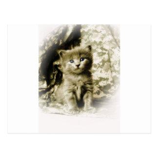 Gray Kitty Cat on ACU Background Postcard