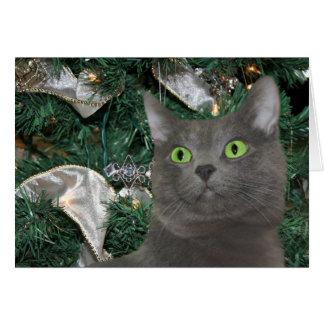 Gray kitty Christmas Card