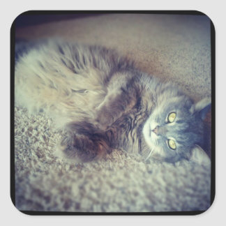 Gray Long-Haired Cat-Instagram by Shirley Taylor Square Sticker