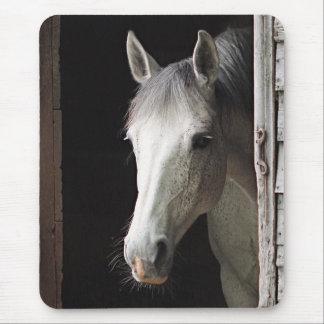 Gray Mare Horse Animals Mousepad