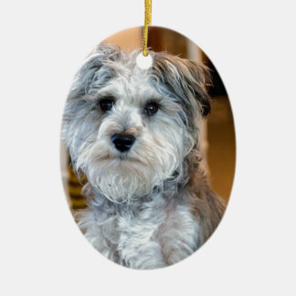 Gray Miniature Schnauzer Ceramic Ornament