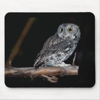 Gray Morph Eastern Screech-Owl at Midnight Mouse Pad