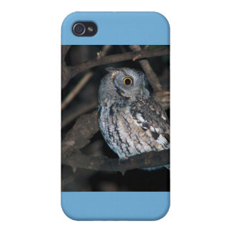 Gray Morph Eastern ScreechOwl at Night iPhone 4/4S Cases