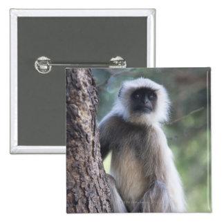 Gray or common or Hanuman langur Pinback Button