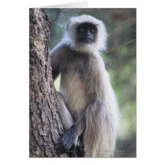 Gray or common or Hanuman langur Cards