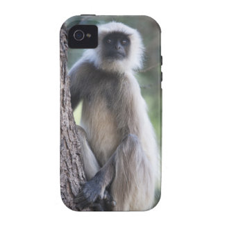 Gray or common or Hanuman langur iPhone 4/4S Cover