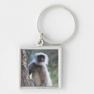 Gray or common or Hanuman langur Keychain