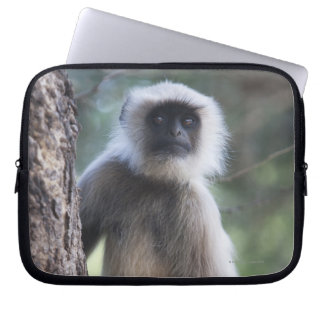 Gray or common or Hanuman langur Laptop Sleeve