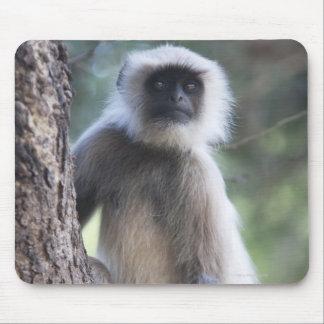 Gray or common or Hanuman langur Mousepad