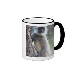 Gray or common or Hanuman langur Mugs