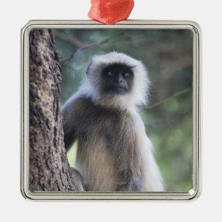 Gray or common or Hanuman langur Ornaments