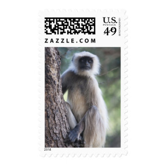 Gray or common or Hanuman langur Postage Stamps