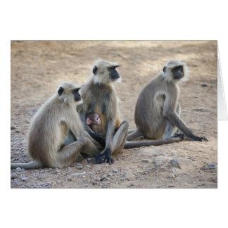 Gray or common or Hanuman langur Semnopithecus Cards