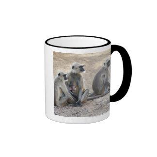 Gray or common or Hanuman langur Semnopithecus Mug