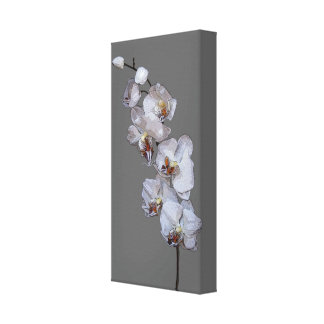 Gray Orchids Wrapped Canvas Gallery Wrap Canvas