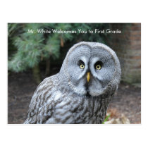 Gray Owl Welcome Students Custom Postcard