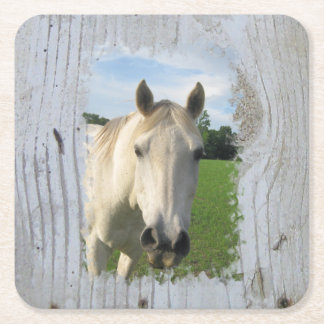 Gray Quarter Horse on Whitewashed Board Square Paper Coaster