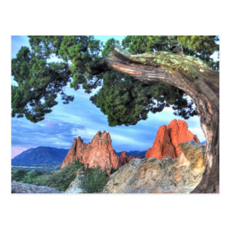 Gray Rock framed by Tree Postcard