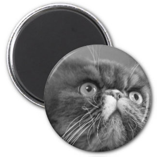 gray scale persian magnet