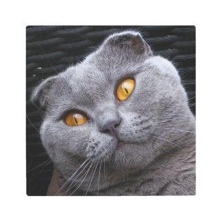 Gray scottish fold cat metal print