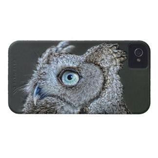 Gray Screech Owl iPhone 4 Cover