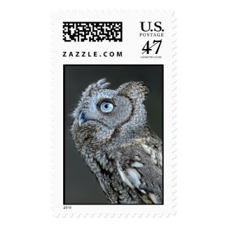Gray Screech Owl Postage