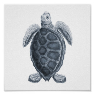Gray Sea Turtle Sealife Group12A print #7
