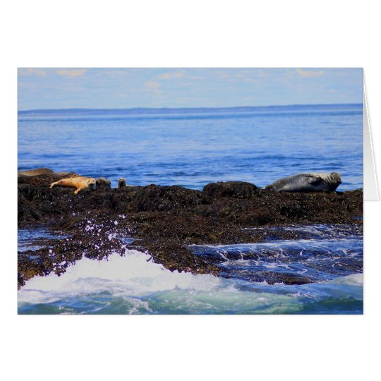 Gray Seal and Harbor Seal Card