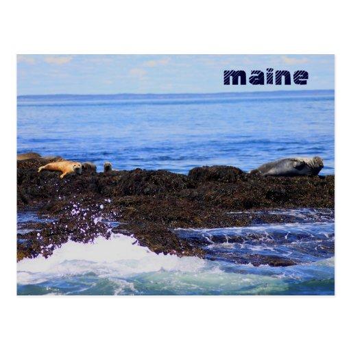 Gray Seal and Harbor Seal Maine Coast Postcard
