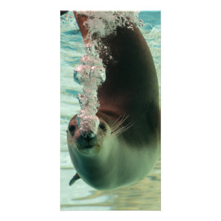 Gray Seal Diving underwater bubbles from nose Card