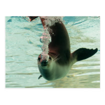 Gray Seal Diving underwater bubbles from nose Postcard