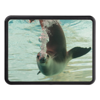 Gray Seal Diving underwater bubbles from nose Tow Hitch Cover