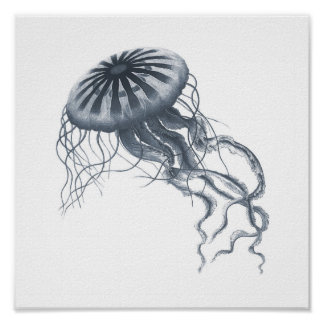 Gray Sealife Group 12A Print #2 Jelly fish