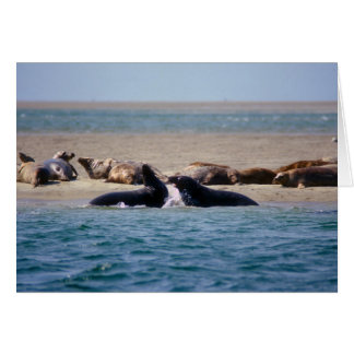 Gray Seals Monomoy Island Cape Cod Card