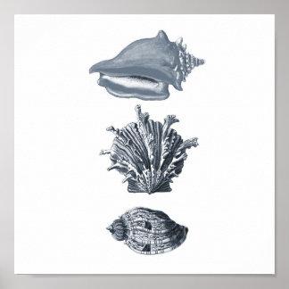 Gray seashells beach decor print #8
