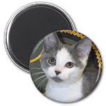 Gray/Silver/Grey and White Kitten Magnets