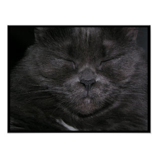 Gray Sleepy Cat Poster