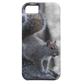 Gray Squirrel iPhone 5 Covers