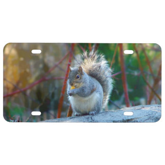 Gray squirrel eating License Plate