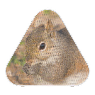 Gray Squirrel eating seeds Bluetooth Speaker