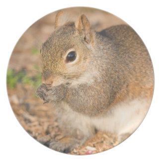Gray Squirrel eating seeds Melamine Plate