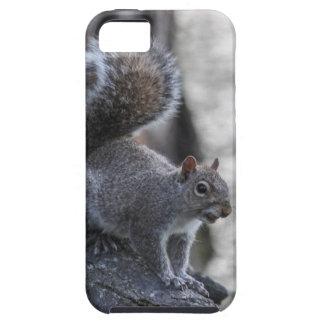 Gray Squirrel iPhone SE/5/5s Case