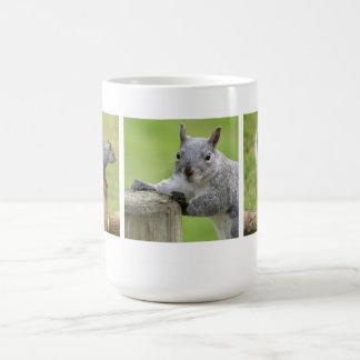 Gray Squirrel Coffee Mugs