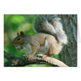 "Gray Squirrel ""Oh Nuts."" 5x7 Greeting Card"